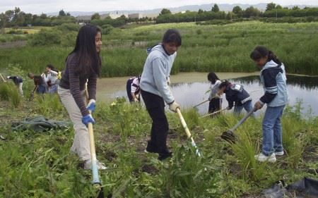Volunteers working the wetlands ground