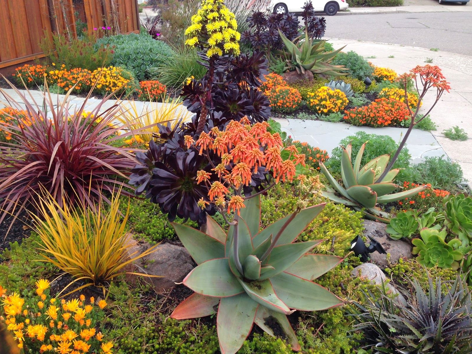 Water Smart Landscaping