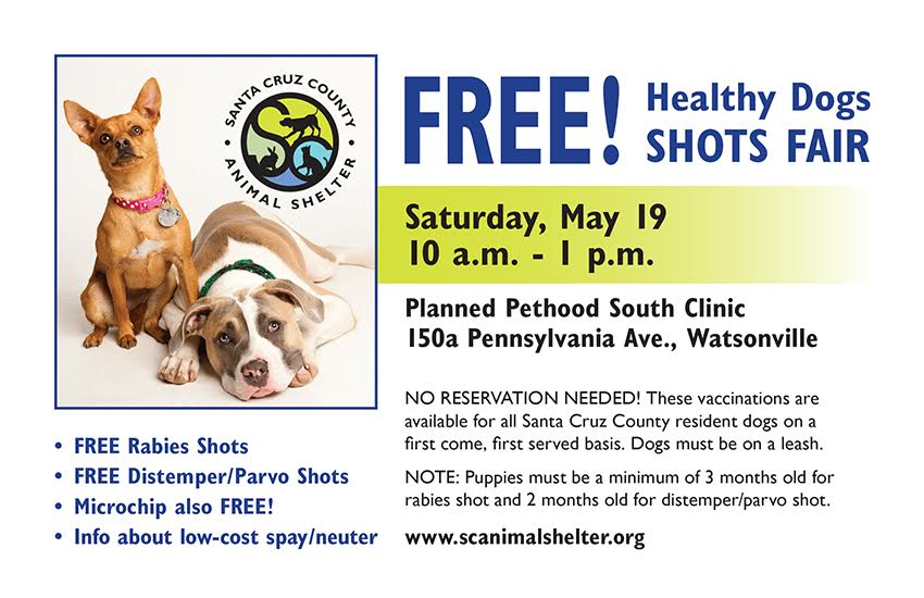 Santa Cruz County Animal Shelter Healthy Dog Fair