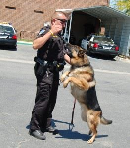 Police Dog and Officer